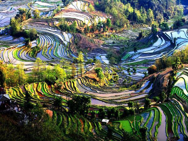 Rizi U00e8res En Terrasses De Yuanyang